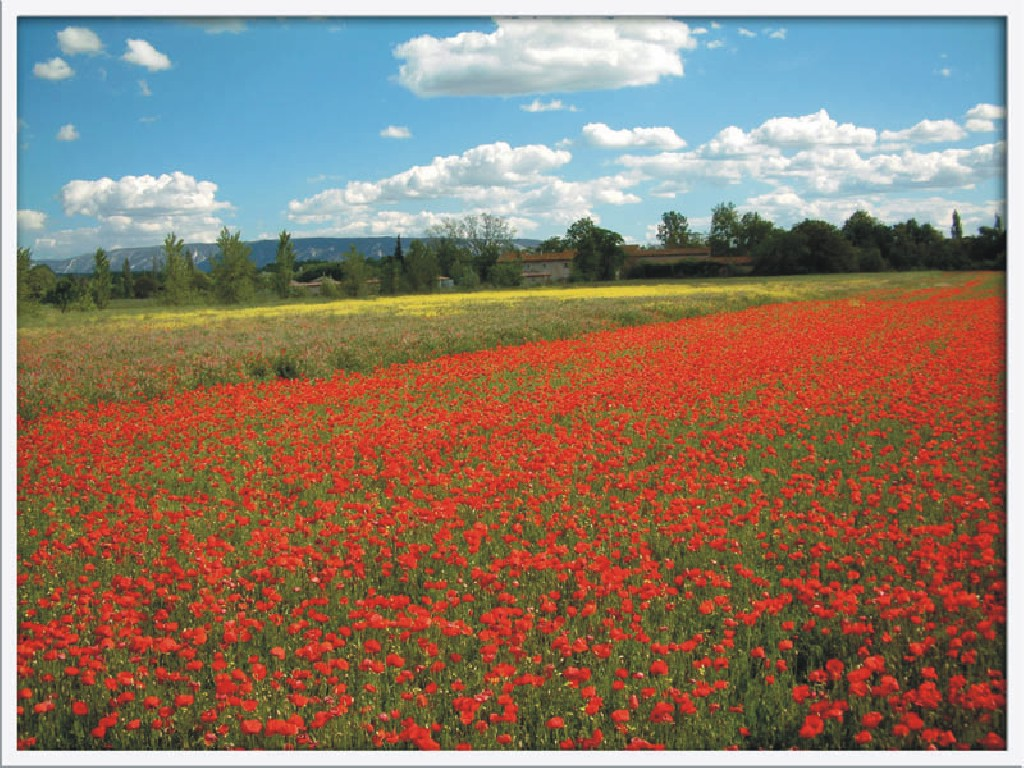 How In Flanders Fields Poem Inspired Remembrance Day Poppies